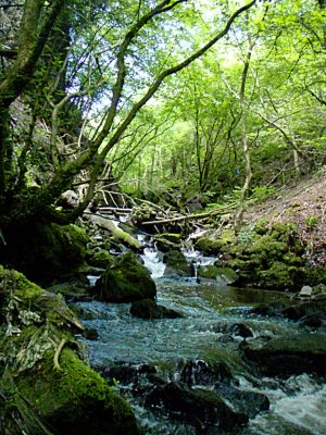 Within The Clydach Gorge - Photo by Barry Burn